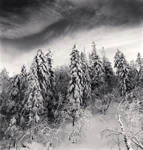 Michael Kenna Photography Tree