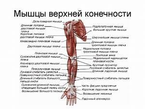 Артроз тазобедренного сустава 1 степени лечение народные средства
