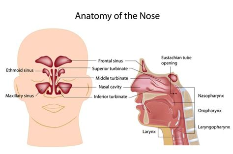 Chronic Sinusitis Doctor In Los Angeles