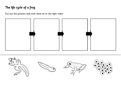 fish cycle worksheet worksheets for all