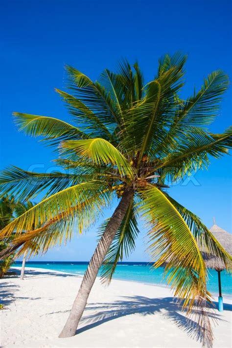 foto palme shop vidunderligt landskab med en palme og stock foto colourbox