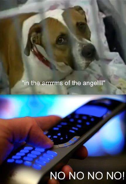 In The Arms Of An Angel Meme - sarah mclachlan sad dog www imgkid com the image kid has it