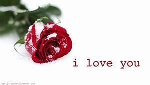 Download Rose I Love U Wallpaper Gallery