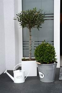 Deko Vor Haustür : ber ideen zu olivenbaum auf pinterest olivenbaum pflege apfelbl te und feigenbaum ~ Markanthonyermac.com Haus und Dekorationen
