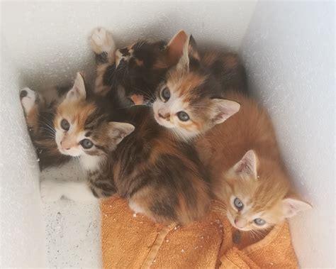 Cerco In Regalo - regalasi gattini dolcissimi regalo gattino a torino