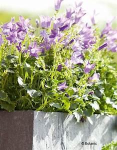 Jardiniere Fleurie Plein Soleil : une jardini re fleurie pour l t elle d coration ~ Melissatoandfro.com Idées de Décoration