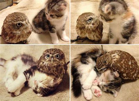 cute kitten  owl   friends luvbat