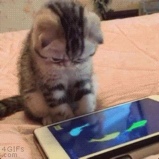 Cat Apps Gifs  Find & Share On Giphy