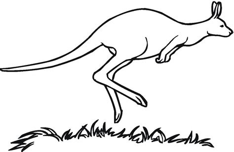 printable kangaroo coloring pages  kids
