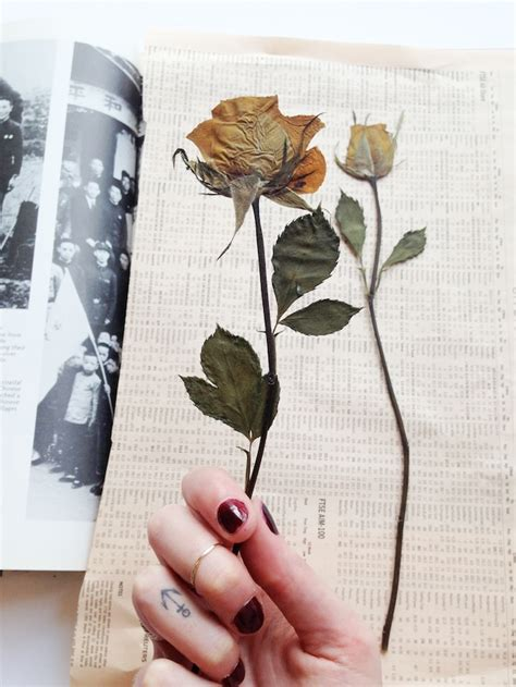 how to press flowers how to press botanicals a pair a spare