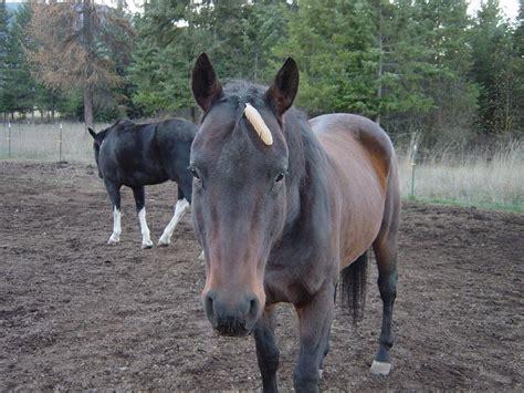 horse trust hope camping