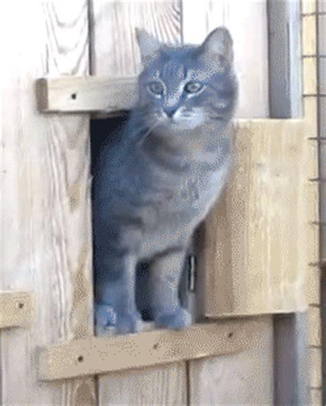 this is a perfect cat meme gif   WiffleGif