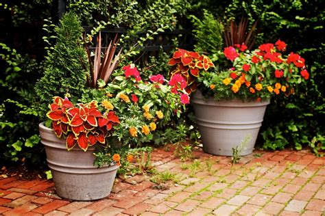 Creative Container Gardening For Beginners