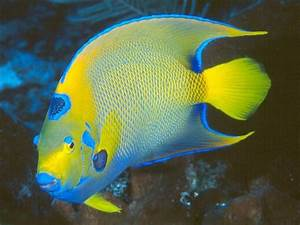 PicturesPool: Beautiful Fishes Wallpaper Pictures | Sea ...  Aquatic