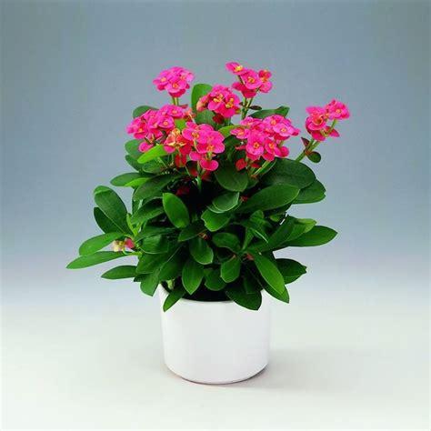 Fiori Per Appartamento fiori da appartamento piante appartamento come