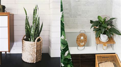 The Best Bathroom Plants To Thrive In High-humidity Areas