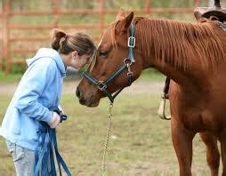 equine assisted learning  psychotherapy bright
