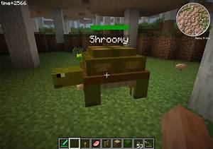 Turtle Glitch Minecraft Project
