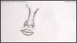 Human Nose and Mouth   Learn How to Draw Free