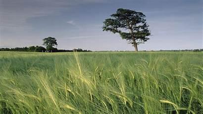 Barley Kingdom North United