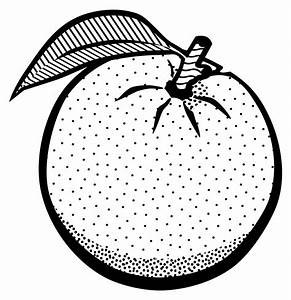 Orange clipart black and white - Pencil and in color ...