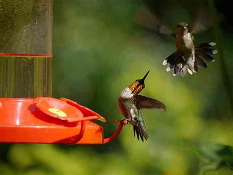 baton rouge audubon society