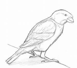 Zeichnen Lernen Mit Bleistift : einen vogel zeichnen lernen ~ Frokenaadalensverden.com Haus und Dekorationen