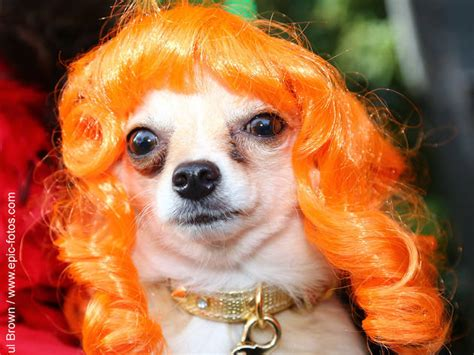 dogs matter halloween dog walk  show
