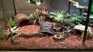 Ball Python Enclosure Plans | Pets | Pinterest | Ball ...