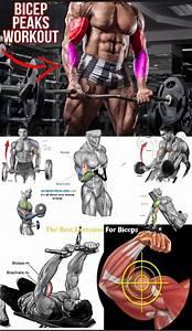 Hot Top Workout For Biceps - Weighteasyloss Com