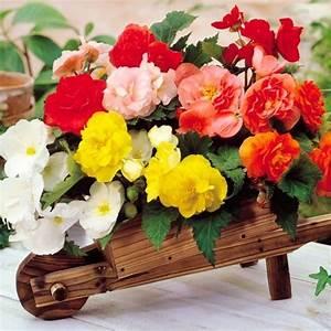 Pflanzen Für Schattigen Balkon : die balkonpflanzen arragieren tipps zur auswahl und pflege ~ Watch28wear.com Haus und Dekorationen
