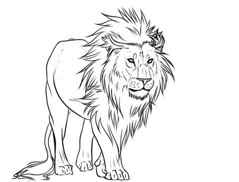 lion drawings pencil drawings sketches freecreatives
