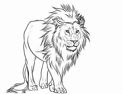 Lion Drawing Magnificent Drawings Pencil Sketches Line