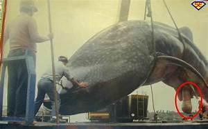Balena • Foto di SuperEdo.it