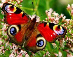 Schmetterlingsgarten Anlegen  So Wird's Gemacht