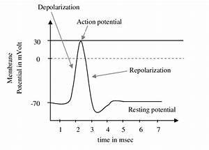 Motor Unit Action Potential Showing Depolarization  Repolarization And