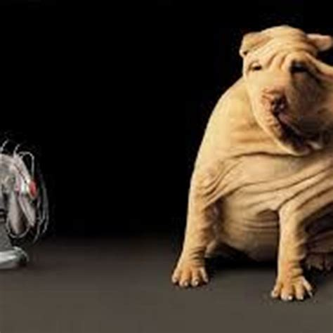 10 Top Funny Dog Desktop Wallpaper Full Hd 1920×1080 For