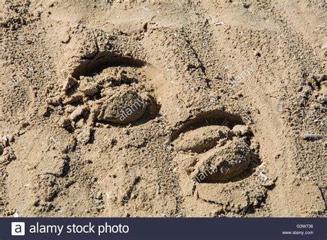 Horse Shoe Prints Sand Stock Photos & Horse Shoe Prints ...