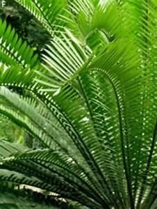 Palmen Für Draußen : berwinterung von palmen palmen berwintern ~ Michelbontemps.com Haus und Dekorationen