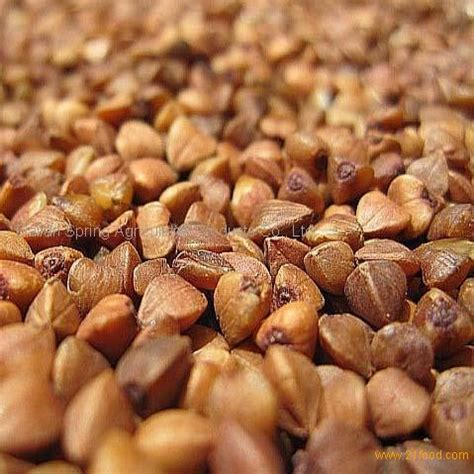 organic roasted buckwheat kernel productschina organic