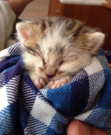 pictures   cutest kittens  top