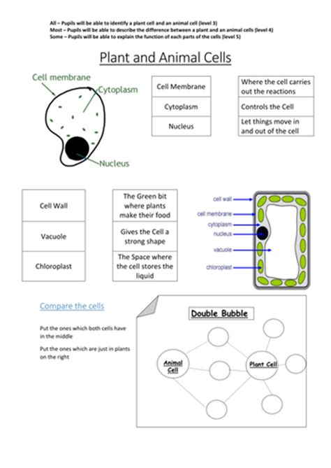 plant  animal cells  lmullany teaching resources tes