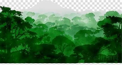 Clipart Natural Rainforest Environment Transparent Jungle Nature