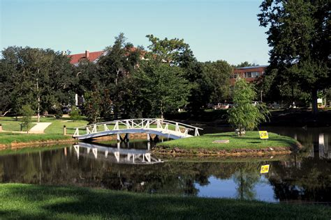 Southern Miss Campus Loses Approximately 75 Trees In. Business Rewards Programs Rehab In Louisiana. Maid Service College Station. Cosmetic Surgeons In Maryland. Teeth Braces For Adults Prices. New Town And Country Van Mortgage Broker Laws. Small Business In Michigan Php Mysql Install. Movers Fort Lauderdale Florida. Investment Analytics Software