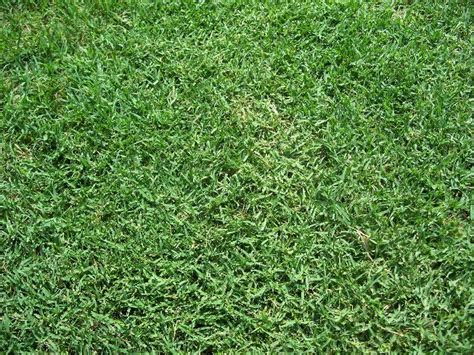 Which Types Of Grass Are Best For El Paso, Tx Lawns