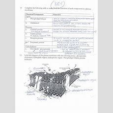 Answer Keys Cell Membrane Worksheets  Ms Ghtaura's Class