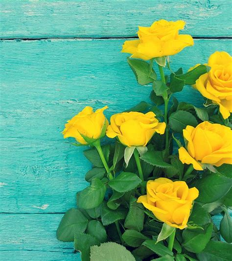 Best Beutiful Top 10 Most Beautiful Yellow Roses