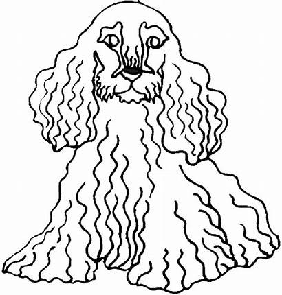 Coloring Pages Dog Dogs Hair Curly Animals