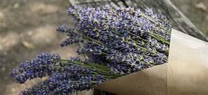 Lavendel Wann Schneiden : lavendel schneiden ~ One.caynefoto.club Haus und Dekorationen