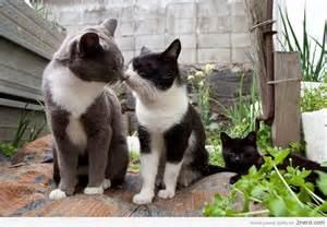 Cat Heaven Island Japan